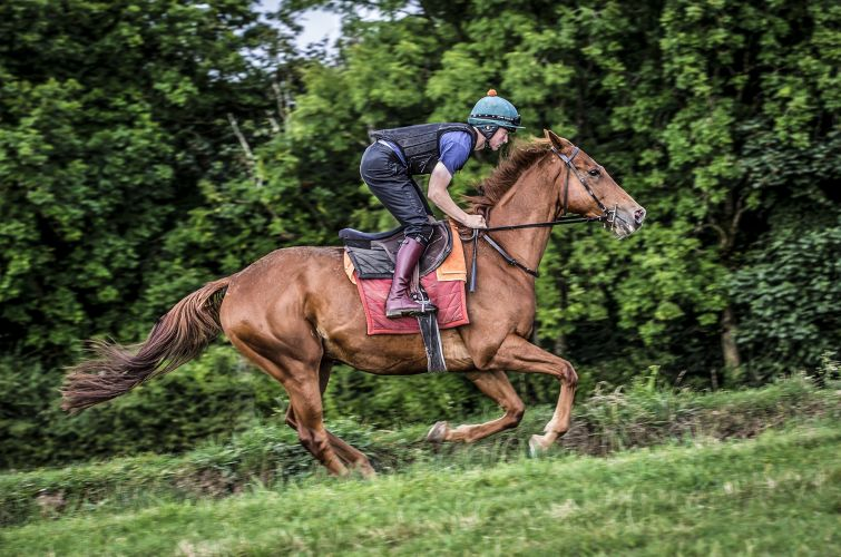 Pink Gin on all weather gallops Grange Hill Farm