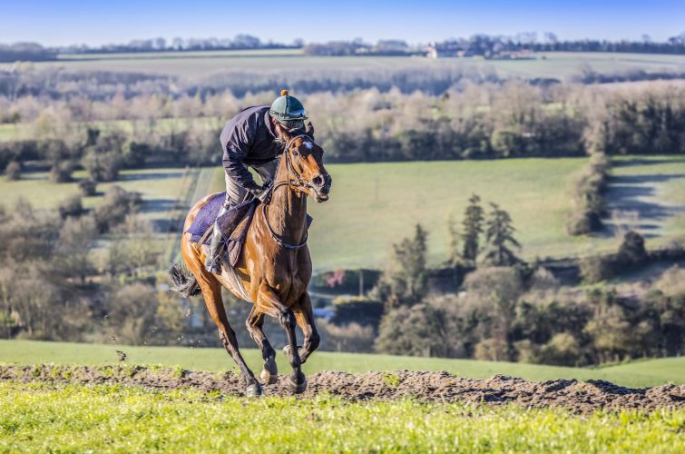 Mr Antolini on the all weather gallops with Craig Gilbey