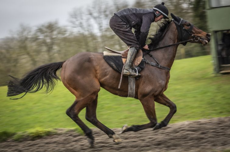 Good Boy Bobby on the all weather gallops