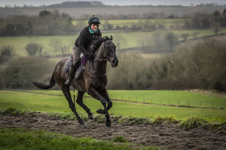 Imperial Acolyte all weather gallops